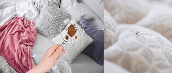Finest Bed Bug Control Services